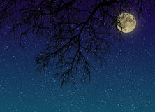 Night starry sky with a full moon behind tree branches close-up view from below. Royalty Free Stock Photo