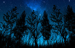 Night starry sky with a milky way and stars, in the foreground trees and bushes of forest area.  Stock Photos
