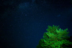 Night starry sky scene. With crown of tree on foreground stock image
