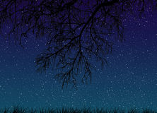 Night starry sky with tree branches close-up and grass view from below Stock Images