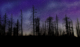 Night of stars. An old forest with the stars of the Milky Way galaxy in the distance. Heavenly, mysterious, and inspiring with copy space at bottom Stock Photos