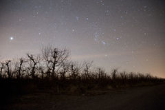 Night with stars Royalty Free Stock Photography