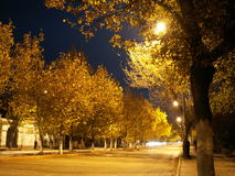 Night Street. Empty night street, with street lights and yellow autumn foliage on the trees stock images