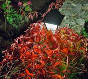 Night street lamp with red plant in the garden Stock Image