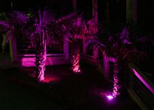 Palms in the lilac light. Royalty Free Stock Images