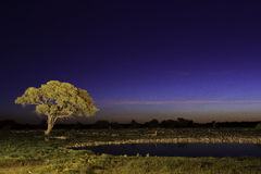 Night time in etosha Stock Photos