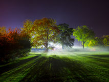 Night time photograph of a single bright light backlighting trees in many colours. Backlight trees with fog and mist on the floor showing wonderful colours after royalty free stock photos