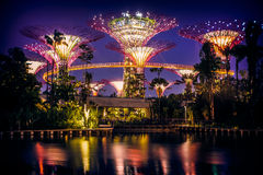 Night time Supertrees at Gardens by the Bay, in Singapore Royalty Free Stock Photo