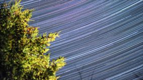 Night timelapse footage of star trails in space. Amazing night timelapse footage of star trails in space. Pine forest. Nature landscape stock footage