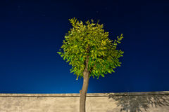 Night tree Royalty Free Stock Images
