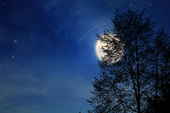 Night tree. Moon in the night, silhouette of tree Stock Images