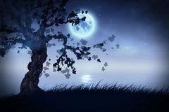 Night tree Stock Photos
