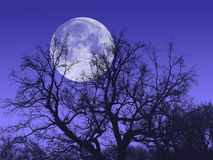 Night tree moon Stock Image
