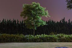 Night Tree Stock Photography