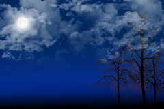 Night trees Royalty Free Stock Photos