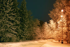 Night trees covered with snow. Trees covered with snow, dark sky and shining lantern through snowing Stock Photography