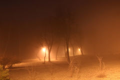 Night trees in the fog royalty free stock photos
