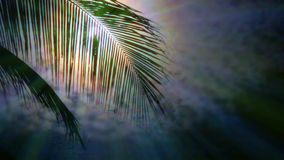 Night in tropics with palm tree and full moon. Night in tropics with palm trees silhouettes and full moon stock footage