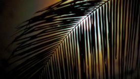 Night in tropics with palm tree and full moon. Night in tropics with palm trees silhouettes and full moon stock video