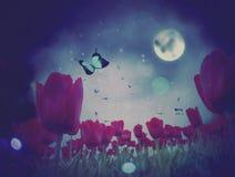 Night Tulips Royalty Free Stock Photo