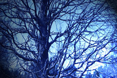 The night under the branch. The beauty of the night intoxicated me Royalty Free Stock Images