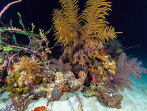 Night underwater background with soft and hard corals, Cayo Larg Royalty Free Stock Images