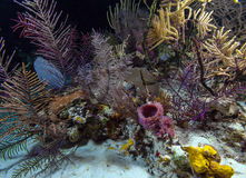 Night underwater background with soft and hard corals, Cayo Larg Stock Photography