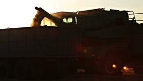 Night unloading. Evening. Harvester unloads grain into a truck body. Lens flare stock video
