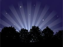 Night. [Vector]. Beautiful night background. High-detailed forest Royalty Free Stock Photos