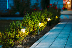 Night View Of Flowerbed With Flowers Illuminated By Energy-Savin. G Solar Powered Lanterns Along Path Causeway On Courtyard Going To The House Royalty Free Stock Photos