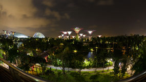 Night view of the garden singapore Royalty Free Stock Photography