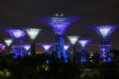 Night view of the garden singapore Stock Photography