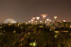 Night view of Gardens by the Bay Royalty Free Stock Image