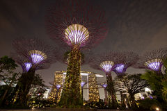 Night view of Gardens by the Bay Stock Photography