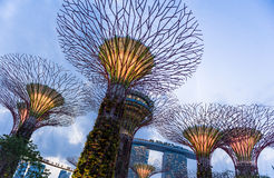 Night view of Gardens by the Bay, Singapore. Twilight view of architectural landmark Gardens by the Bay, Singapore Royalty Free Stock Image