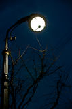 A night view of lantern and tree placed on Bolshaya Konushennaya st. in Saint-Petersburg, Russia. On this photo you can see one of the old street lanterns of Royalty Free Stock Photography