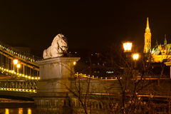 Night view lion statue at the Chain bridge, Budapest, Hungary Royalty Free Stock Photos