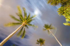Night view of moving palms at the tropical wind Stock Image