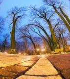 Night view original wet paving stones Royalty Free Stock Photography