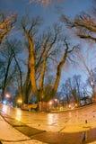 Night view original wet paving stones Royalty Free Stock Image