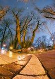Night view original wet paving stones Royalty Free Stock Images