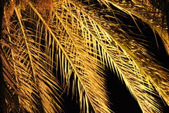 Night view of palm. Tree Royalty Free Stock Photography
