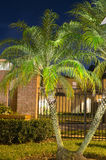 Night view of a palm tree Stock Photo