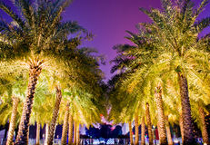 Night view palm trees at Huacheng Hui Royalty Free Stock Photography