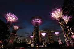 Night view of Singapore's Supertree Grove and the Marina Bay Sands. Supertrees are vertical gardens tree-like structures situated at Gardens by the Bay. Behind Stock Image