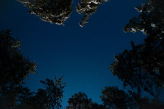 Night view of snow-covered fir trees Stock Images