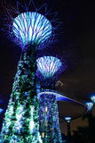 Night scene of super trees in garden by the bay Stock Photos