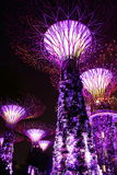 Night view of super trees in garden by the bay. Super iron trees in singapore garden by the bay at night Stock Photo