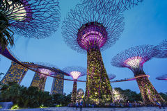 Night view of Supertree at Gardens by the Bay Stock Image