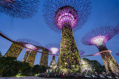 Night view of Supertree at Gardens by the Bay Stock Images